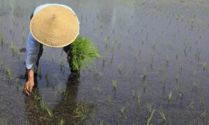 cibo e clima globale