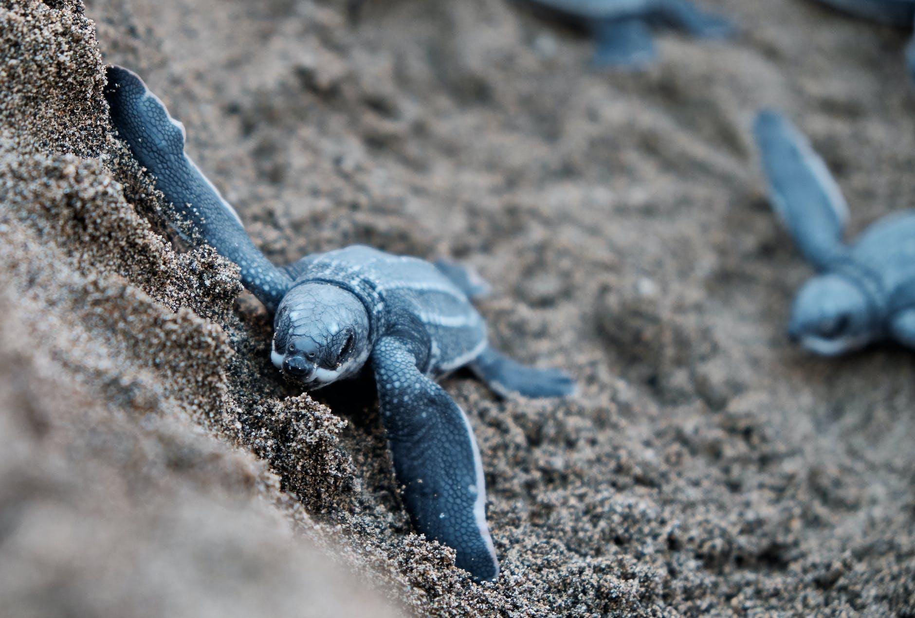 tartarughe in pericolo plastica